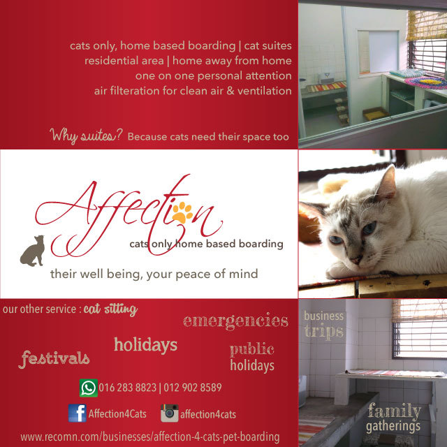 Affection 4 Cats Pet Boarding
