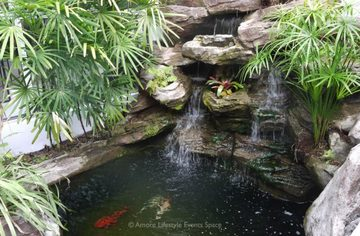 Koi Pond for great photography, videography