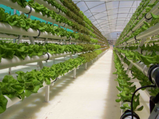 Medium hydroponic