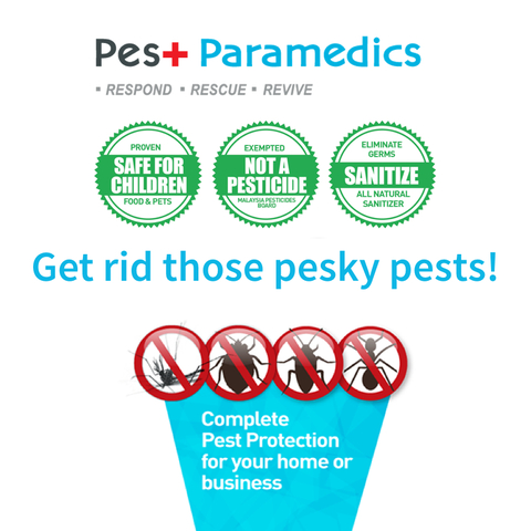 Get Rid of those pesky pest with our non-toxic solutions.
