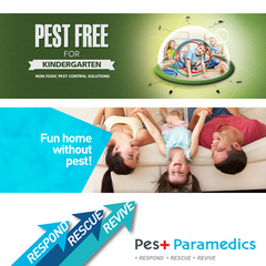 Protect your home against pests
