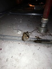 Dead rat at the ceiling area after we carry out rat baiting.
